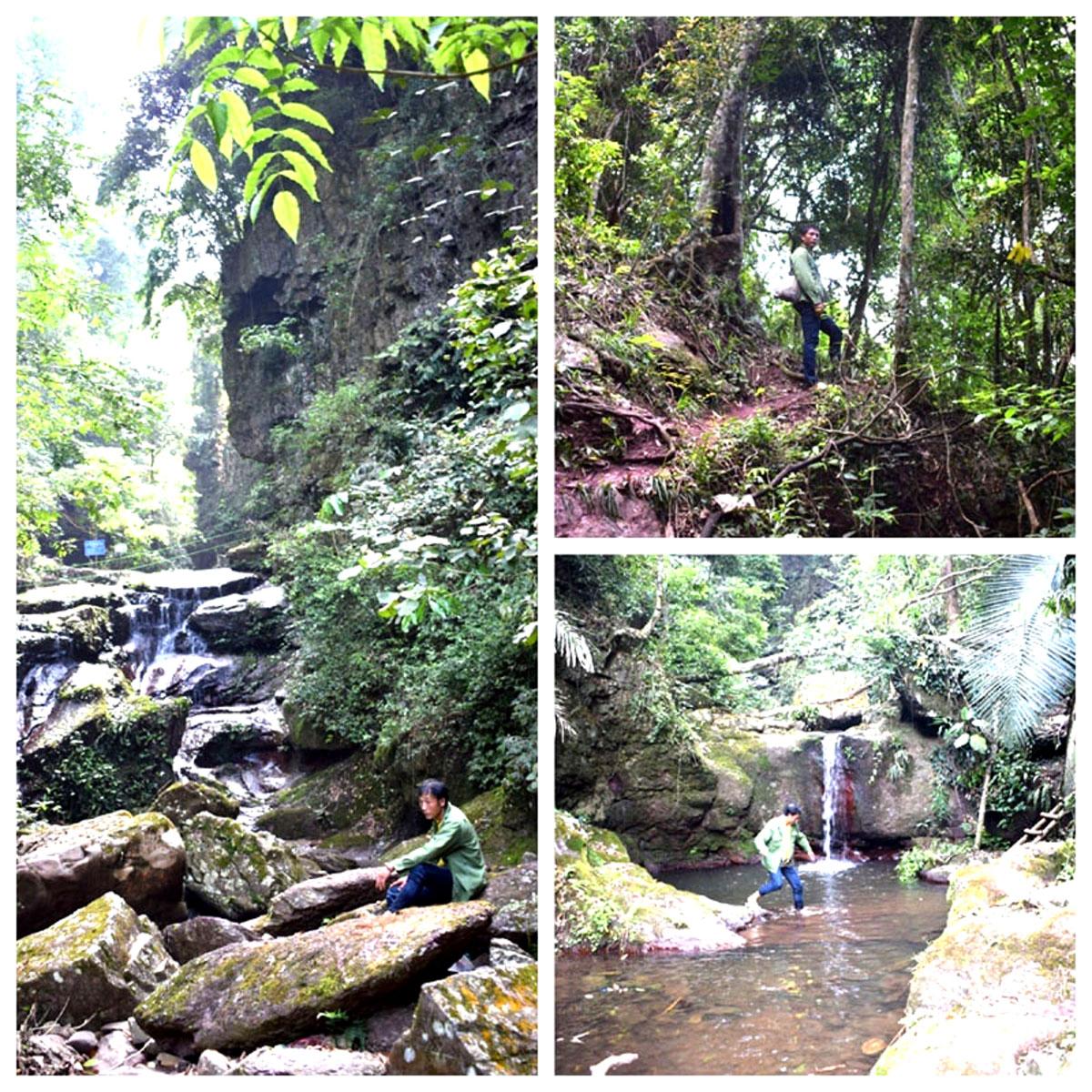 Rừng tự nhiên Hà Lâu khu vực hang Rồng thôn Khe Tao
