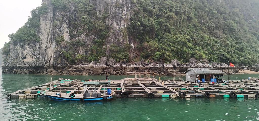 Chiêm ngưỡng vịnh Bái Tử Long đẹp như chốn bồng lai, tiên cảnh - ảnh 7